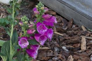 Flowers in Miller Garden