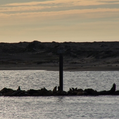 Seals at Sunset