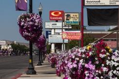 Petunia Lines Streets of Vernal UT