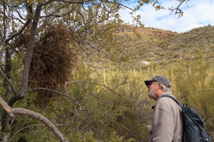 JT Admires Mistletoe