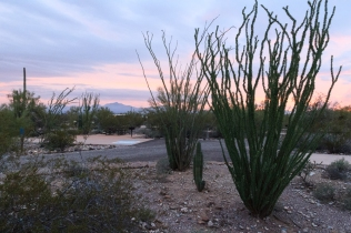 Campsites at Organ Pipe Cactus National Monument Alpine Campground