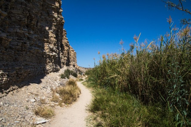 Trail in between a cliff and reeds