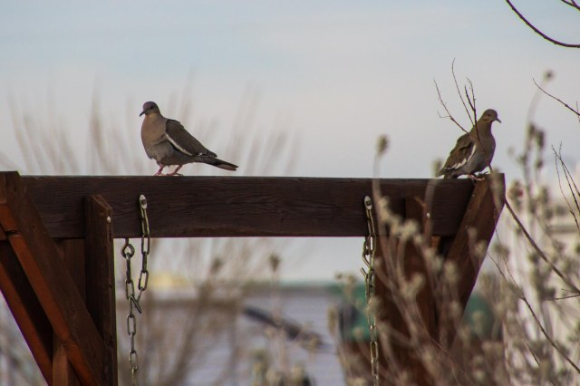 Two doves sitting on wood structure