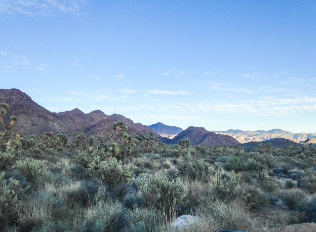 Desert landscape with Joshua trees and mountains