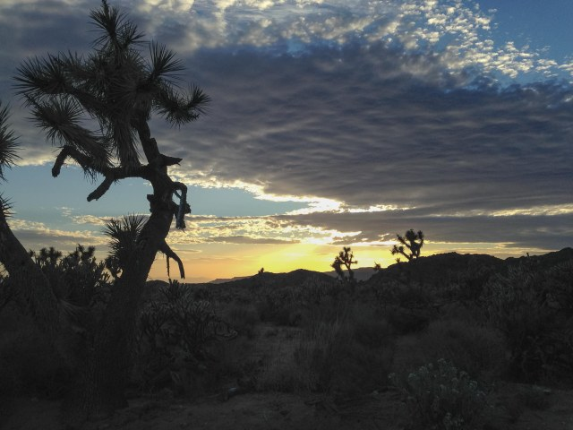 Sunset with Joshua trees and cloudy sky