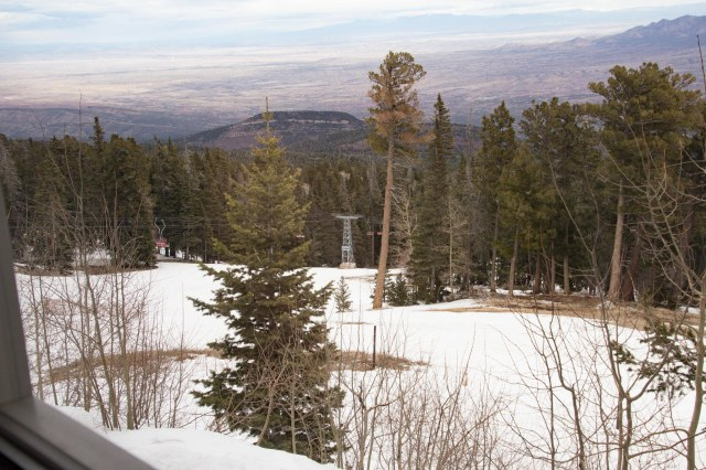 View of evergreen trees, snow, valley below