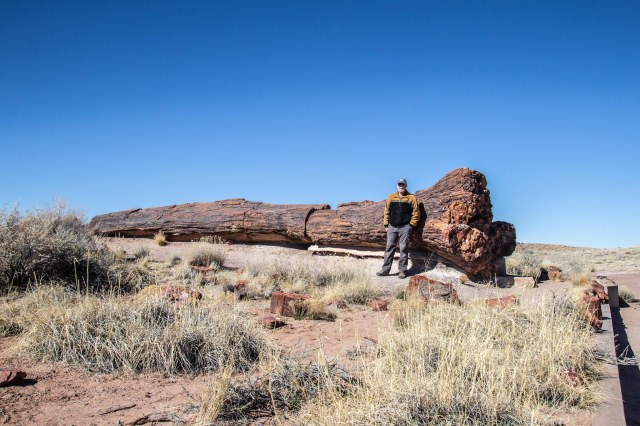 Man standing next to petrified wood log