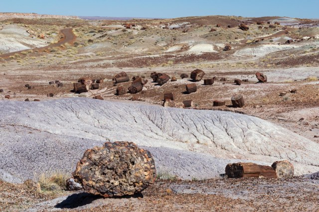 Petrified wood logs scattered around hills