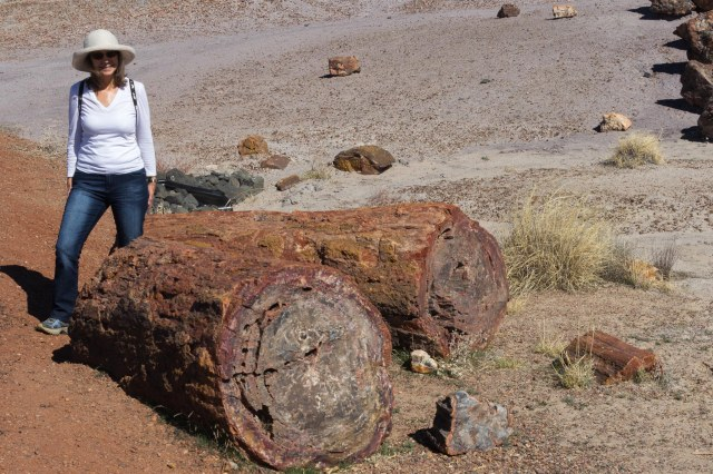 Woman standing next to petrified wood logs