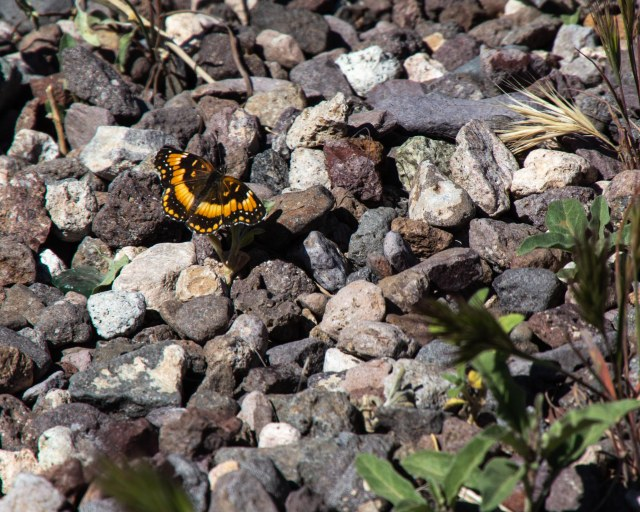 Brown and yellow butterfly on rocks
