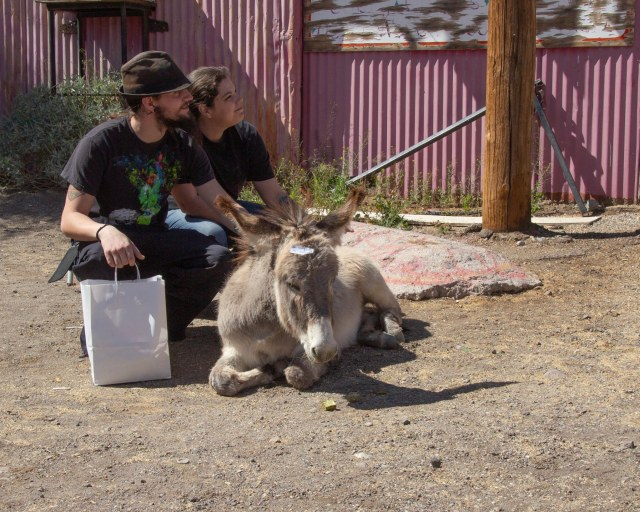 Couple petting a burro