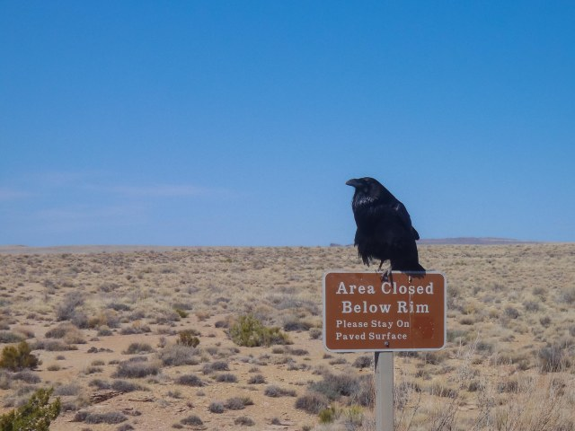 Blue sky with raven on top of area closed sign
