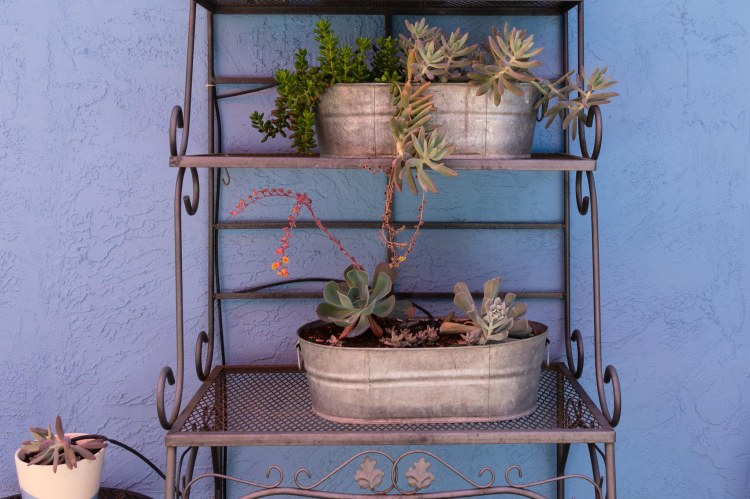 Succulents in oval pails on bakers rack