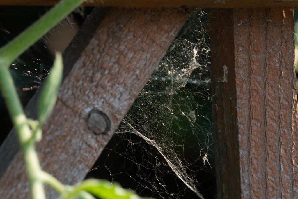 Spider web in triangle shape