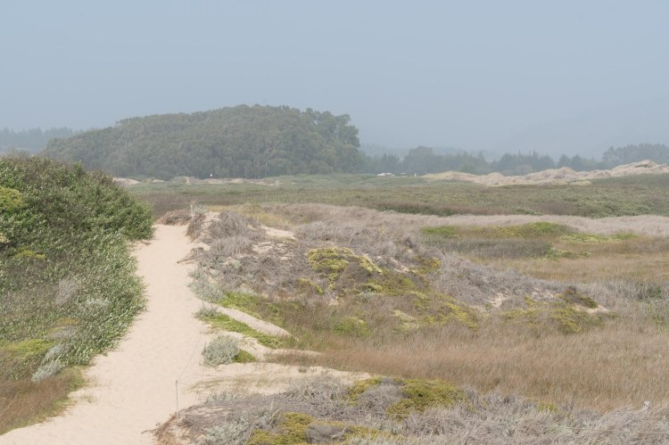 Landscape of sandy trail, clumps of trees muted by fog and smoke