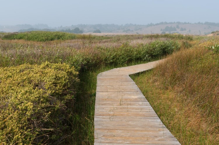 Boardwalk trail through a marsh