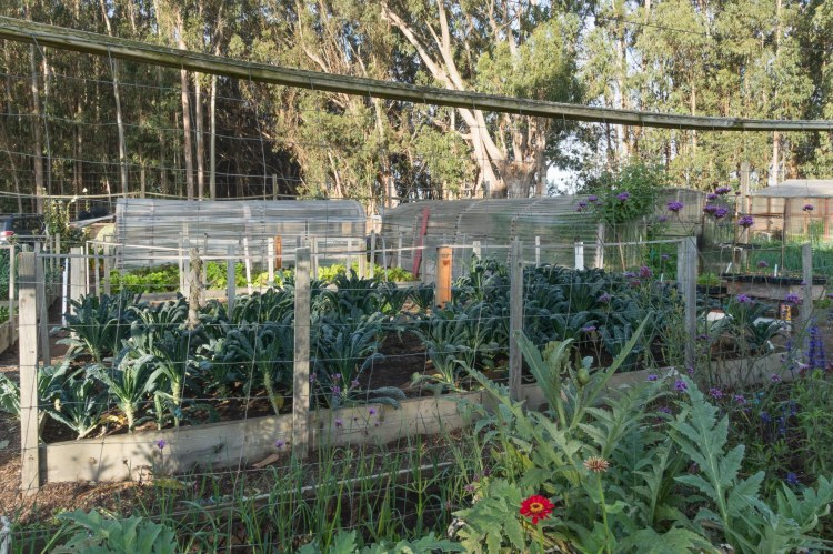 Vegetable and flower garden