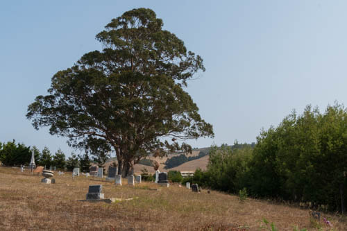Trees on a hill with gravestones