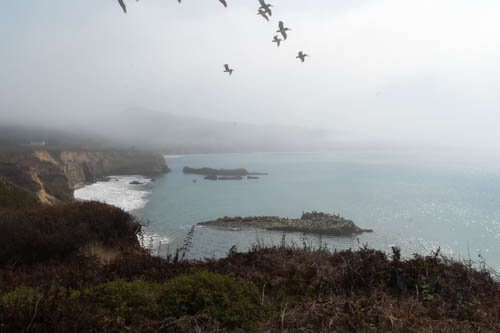 Foggy view of coastline and flying birds