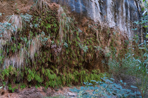 Ferns clinging to a cliff