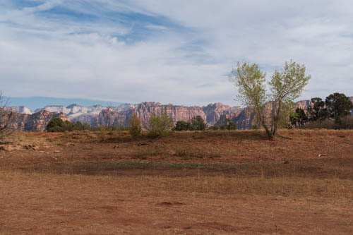 View of V-shaped tree and Zion NP mountains