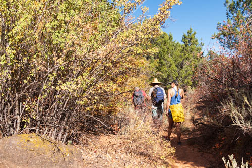 Three hikers walking through bushy trail
