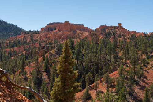 Red rock formations on top of mountain with pine trees