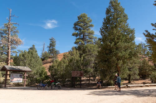 Blue sky and hikers standing near pine trees