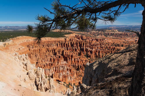 Pine branch and hoodoos