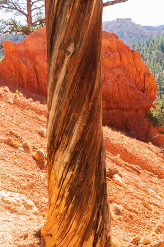 Spiral tree trunk