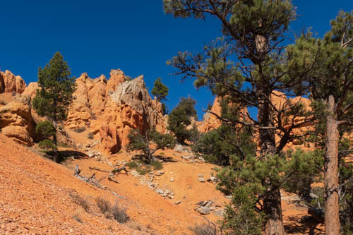 Red rock formations, blue sky, and pine trees