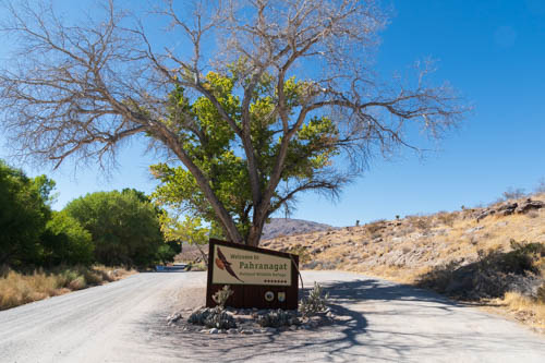 Tree, dirt road, and sign for Pahranagat National Wildlife Refuge