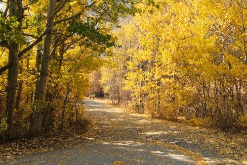 Yellow-leafed trees line a road