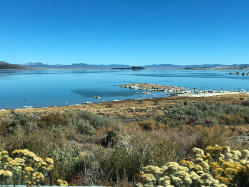 Blue skies over Mono Lake's blue water, flowering shrubs and grass in foreground