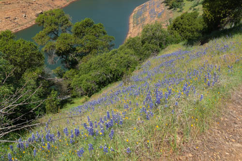 Blue wildflowers on slope and river below