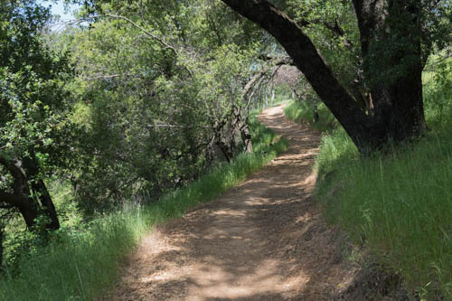 Hiking trail through shady trees and green grass