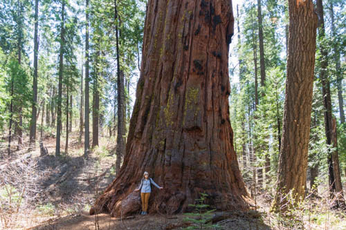 Woman standing at foot of sequoia tree