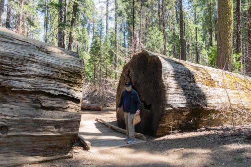 Man standing next to a fallen tree
